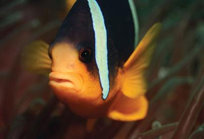 Digital photography and the deep blue sea