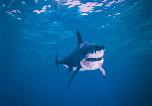 Although entirely modelled in CGI, this shark could strike as much fear as the one in Jaws.