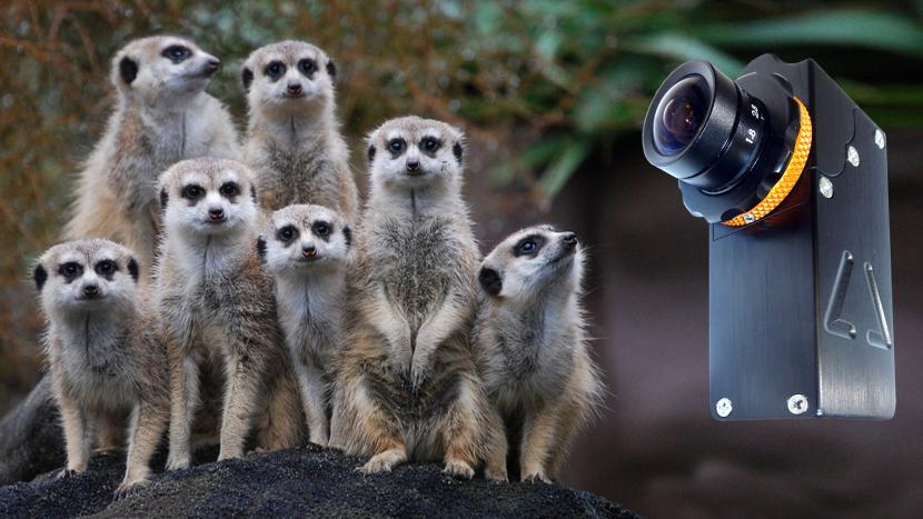 Camera Corps' MeerCat.