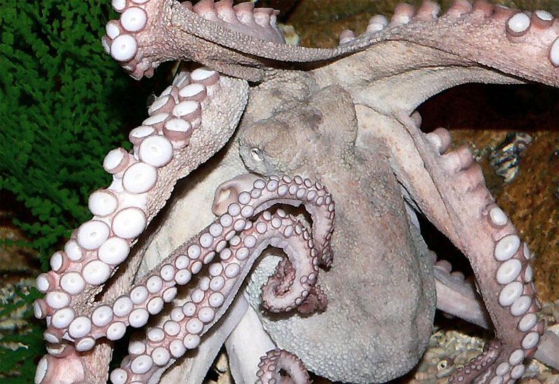 Octopus gets its tentacles around Fox Turkey's newsroom operations.