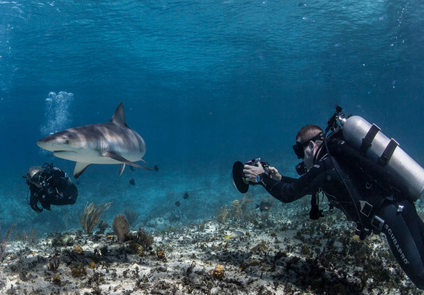 """Andy Casagrande shot 11 films for this year's """"Shark Week"""" installment."""