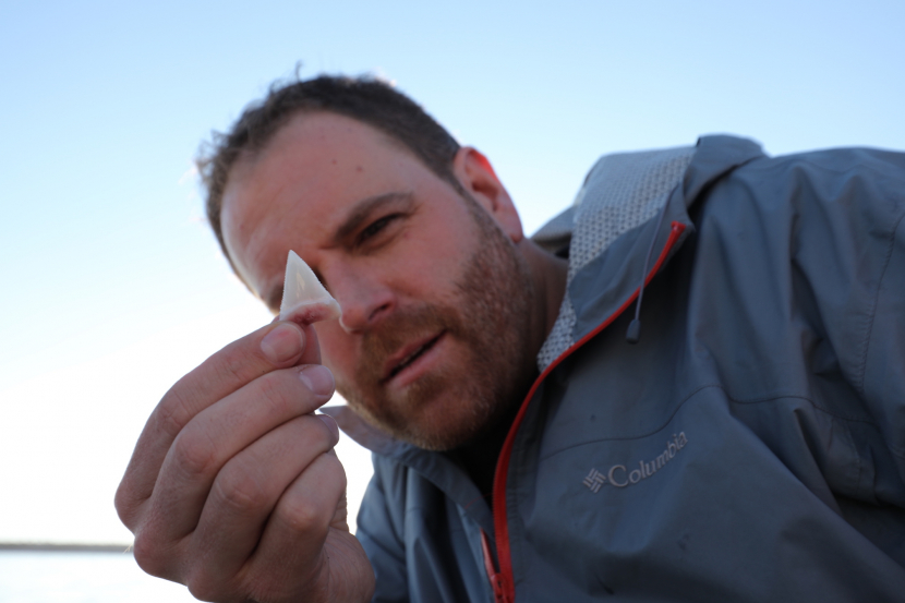 Josh Gates finds a Great White shark tooth.